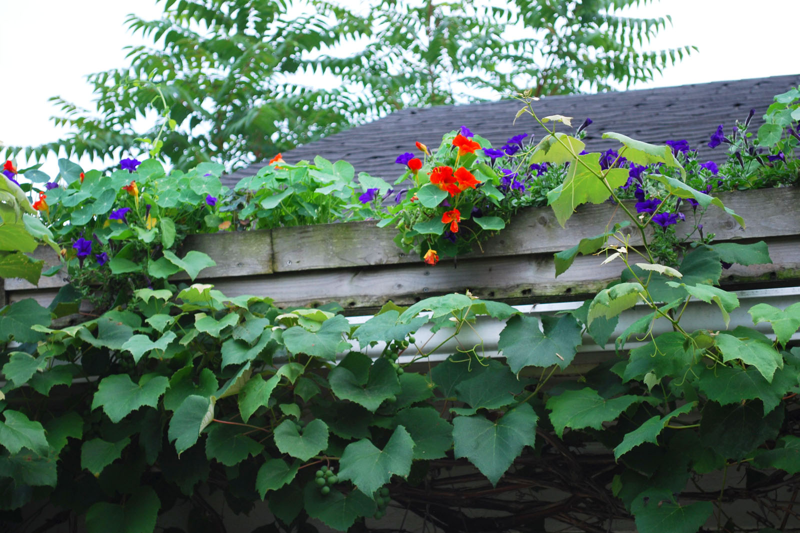 roof-window-box