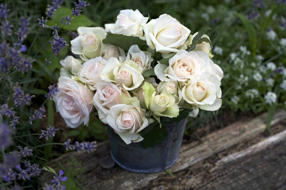 roses_in_charming_herb_pot